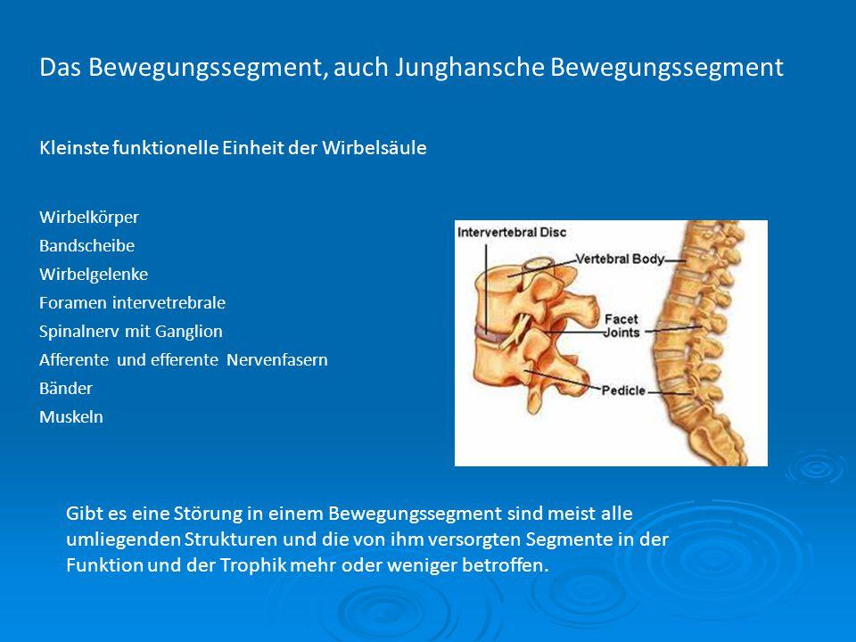 Das Bewegungssegment, auch Junghansche Bewegungssegment Kleinste funktionelle Einheit der Wirbelsäule Wirbelkörper Bandscheibe Wirbelgelenke Foramen i