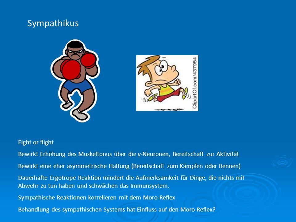 Sympathikus Fight or flight Bewirkt Erhöhung des Muskeltonus über die γ-Neuronen, Bereitschaft zur Aktivität Bewirkt eine eher asymmetrische Haltung (
