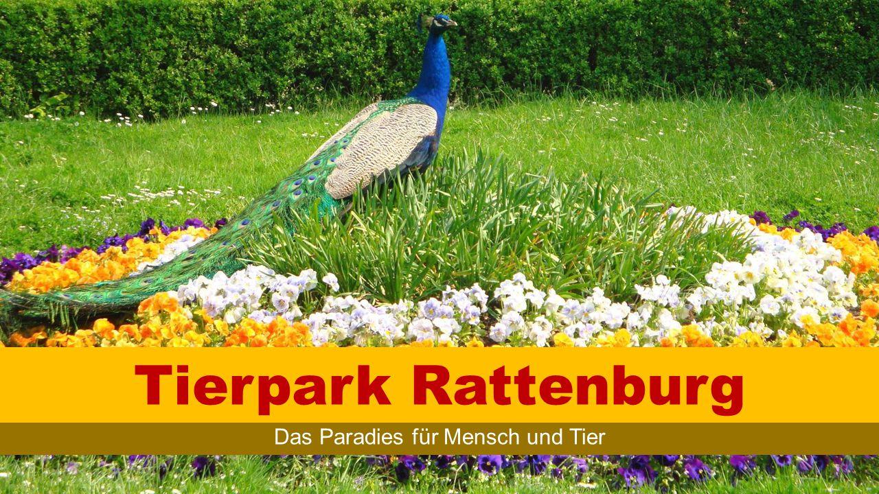 TIERPARK RATTENBURG Überblick © Johnny B.