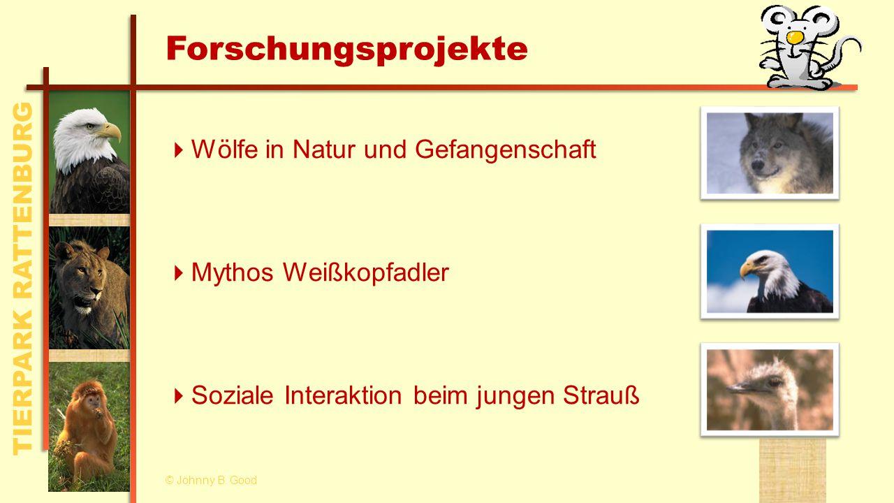 TIERPARK RATTENBURG Forschungsprojekte  Wölfe in Natur und Gefangenschaft  Mythos Weißkopfadler  Soziale Interaktion beim jungen Strauß © Johnny B.