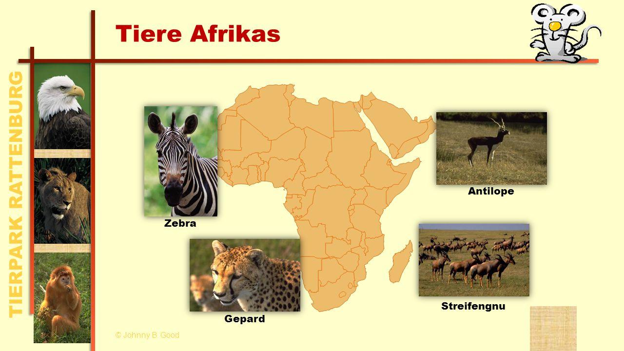 TIERPARK RATTENBURG Tiere Afrikas Antilope Zebra Gepard Streifengnu © Johnny B. Good