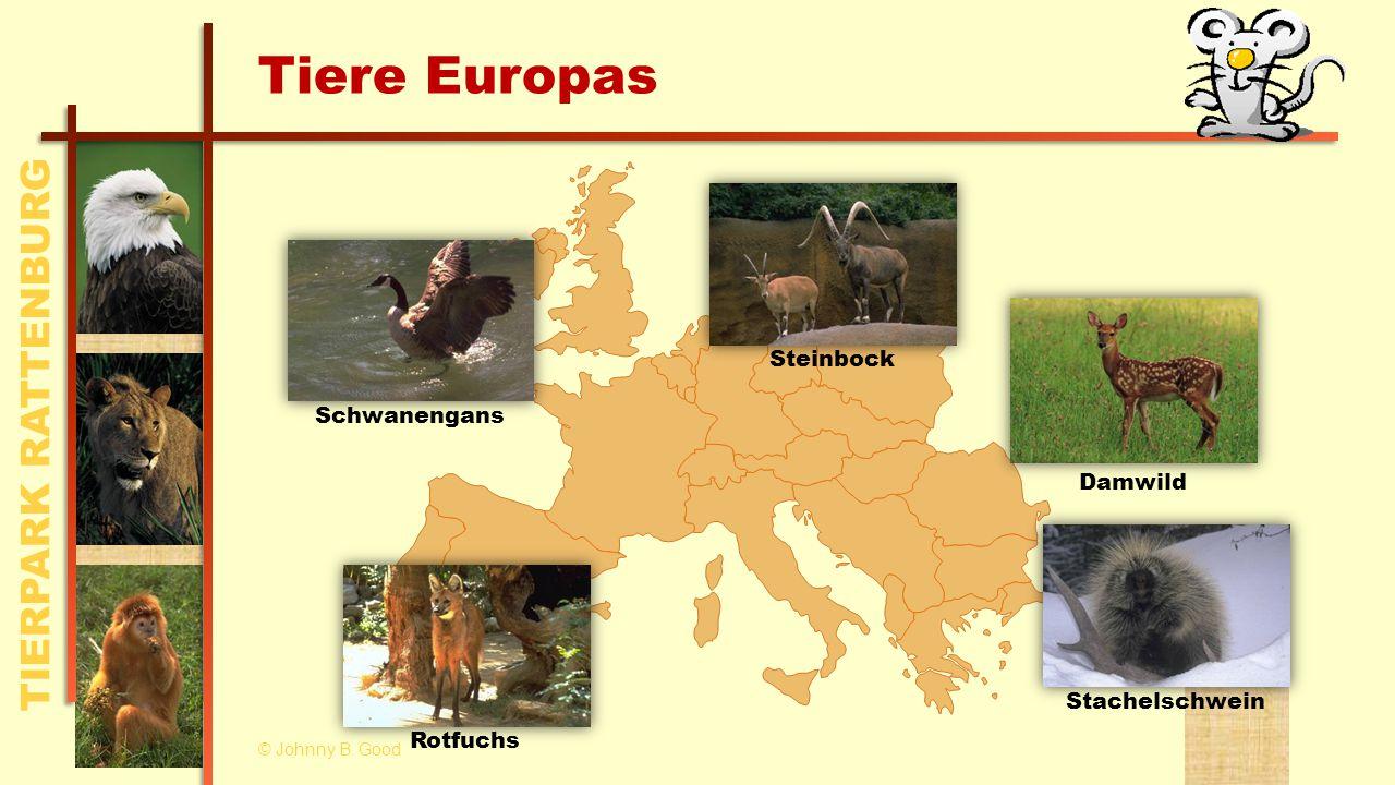 TIERPARK RATTENBURG Tiere Europas Steinbock Damwild StachelschweinRotfuchs Schwanengans © Johnny B.