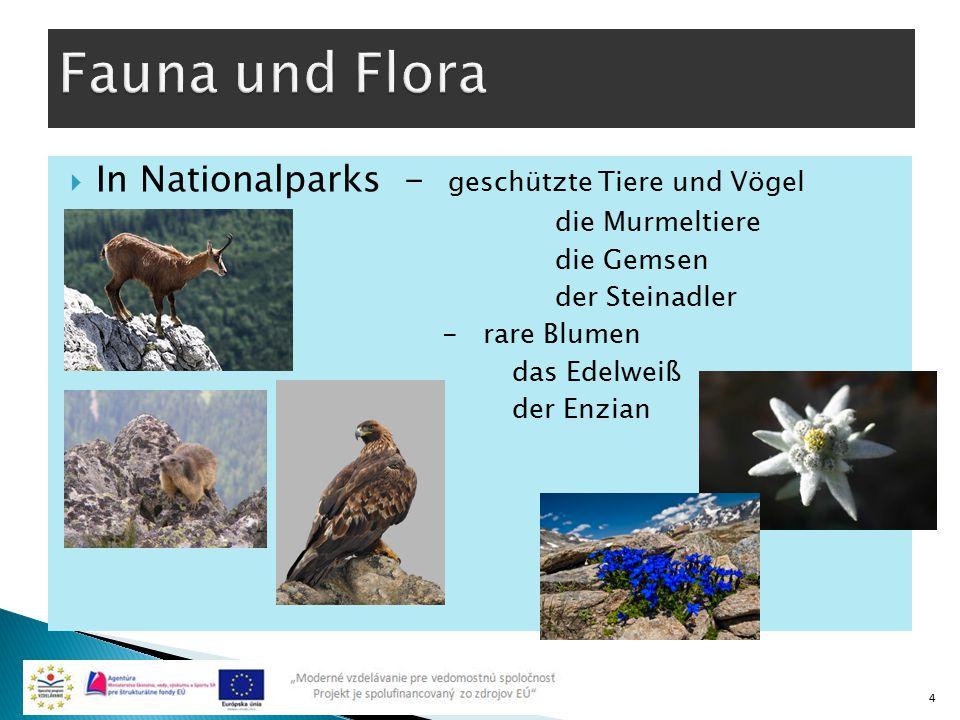  In Nationalparks - geschützte Tiere und Vögel die Murmeltiere die Gemsen der Steinadler - rare Blumen das Edelweiß der Enzian 4