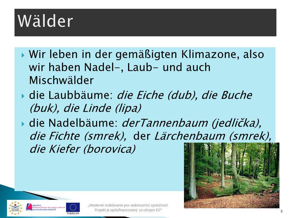  Wir leben in der gemäßigten Klimazone, also wir haben Nadel-, Laub- und auch Mischwälder  die Laubbäume: die Eiche (dub), die Buche (buk), die Lind