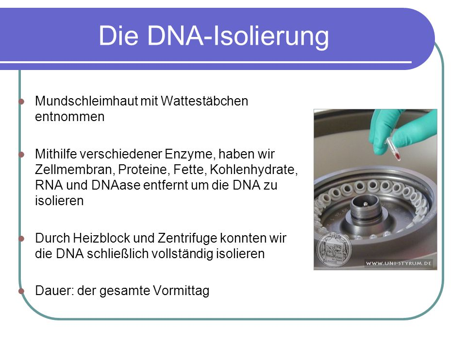 Die DNA-Isolierung Mundschleimhaut mit Wattestäbchen entnommen Mithilfe verschiedener Enzyme, haben wir Zellmembran, Proteine, Fette, Kohlenhydrate, R