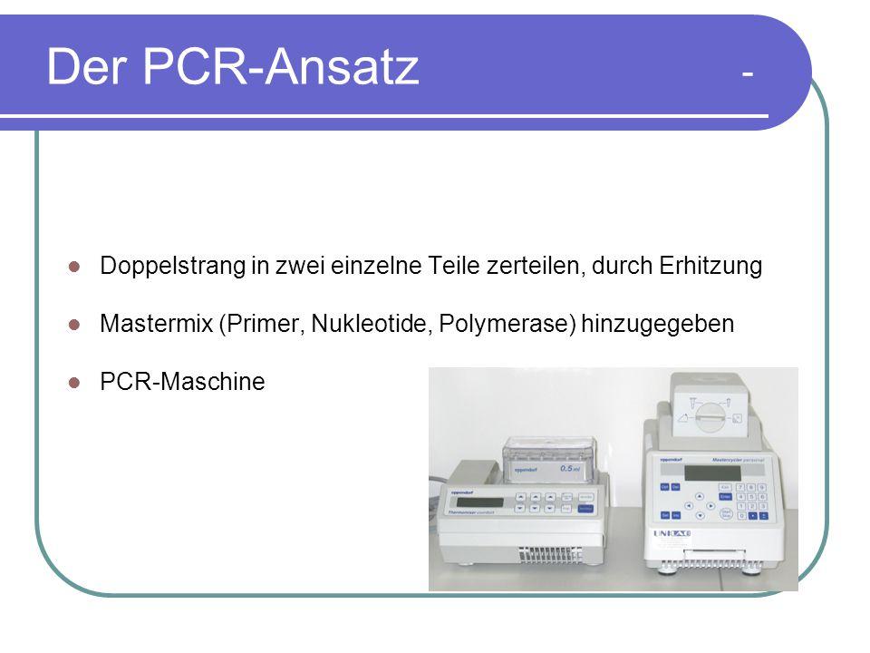 Der PCR-Ansatz - Doppelstrang in zwei einzelne Teile zerteilen, durch Erhitzung Mastermix (Primer, Nukleotide, Polymerase) hinzugegeben PCR-Maschine