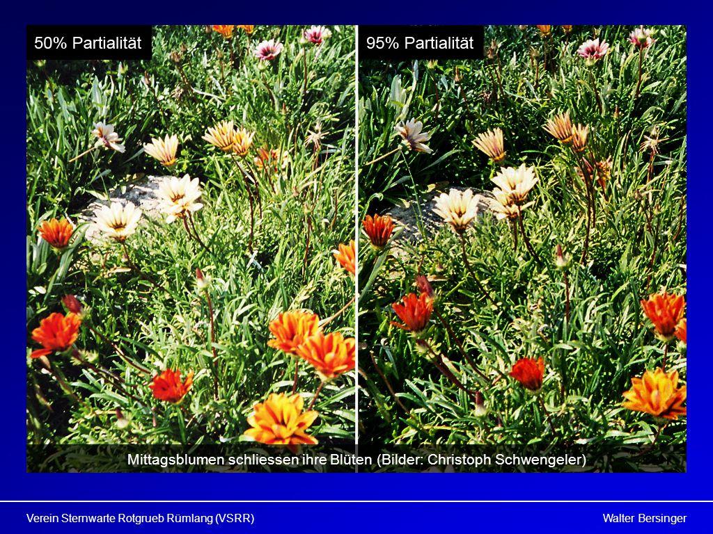 Walter BersingerVerein Sternwarte Rotgrueb Rümlang (VSRR) Mittagsblumen schliessen ihre Blüten (Bilder: Christoph Schwengeler)