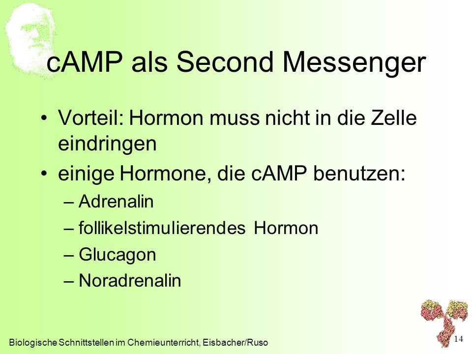 cAMP als Second Messenger Vorteil: Hormon muss nicht in die Zelle eindringen einige Hormone, die cAMP benutzen: –Adrenalin –follikelstimulierendes Hor