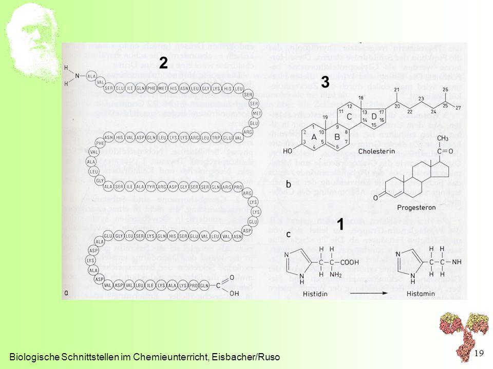 Biologische Schnittstellen im Chemieunterricht, Eisbacher/Ruso 19 2 3 1