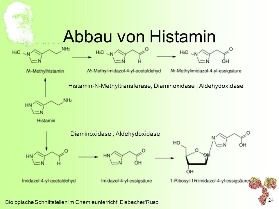 Abbau von Histamin Biologische Schnittstellen im Chemieunterricht, Eisbacher/Ruso 24 Histamin-N-Methyltransferase, Diaminoxidase, Aldehydoxidase Diami