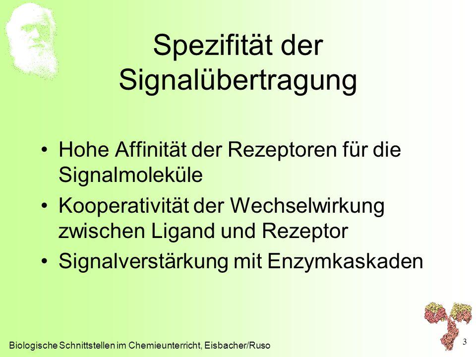 Spezifität der Signalübertragung Hohe Affinität der Rezeptoren für die Signalmoleküle Kooperativität der Wechselwirkung zwischen Ligand und Rezeptor S