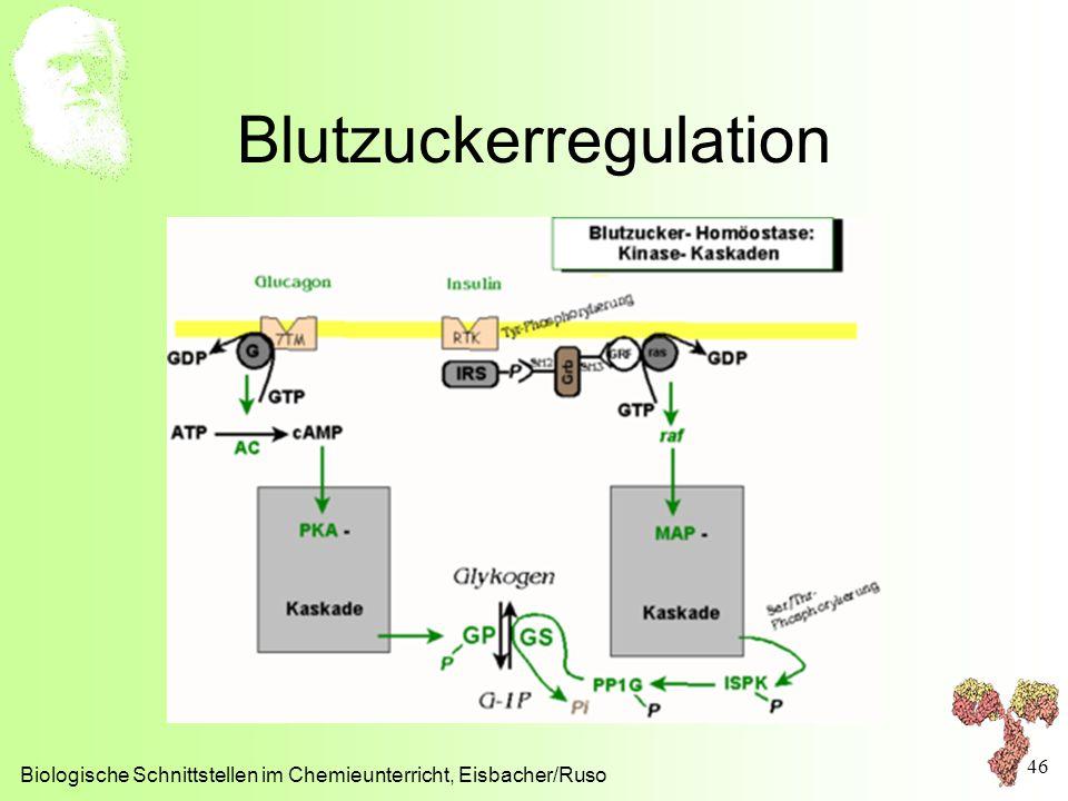 Blutzuckerregulation Biologische Schnittstellen im Chemieunterricht, Eisbacher/Ruso 46