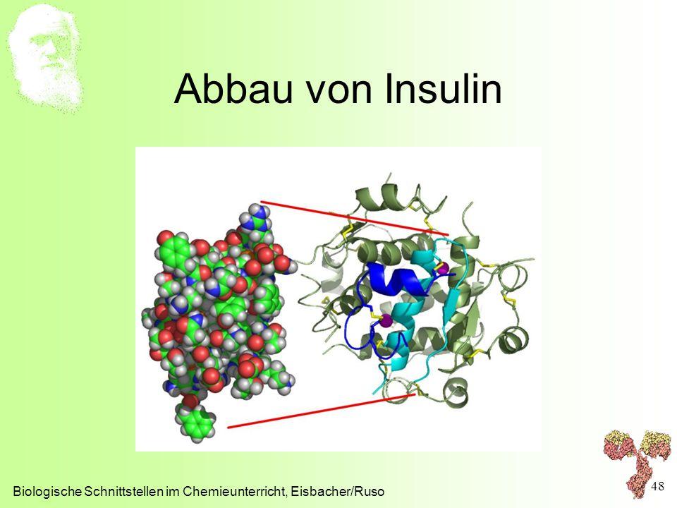 Abbau von Insulin Biologische Schnittstellen im Chemieunterricht, Eisbacher/Ruso 48
