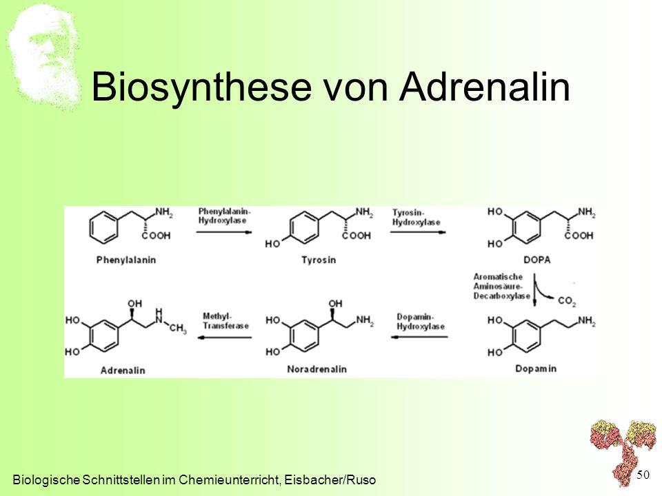 Biosynthese von Adrenalin Biologische Schnittstellen im Chemieunterricht, Eisbacher/Ruso 50