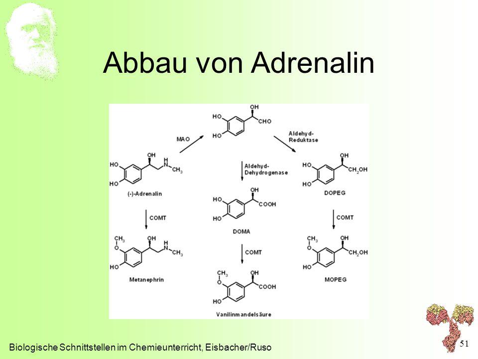 Abbau von Adrenalin Biologische Schnittstellen im Chemieunterricht, Eisbacher/Ruso 51