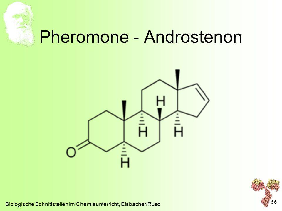 Pheromone - Androstenon Biologische Schnittstellen im Chemieunterricht, Eisbacher/Ruso 56