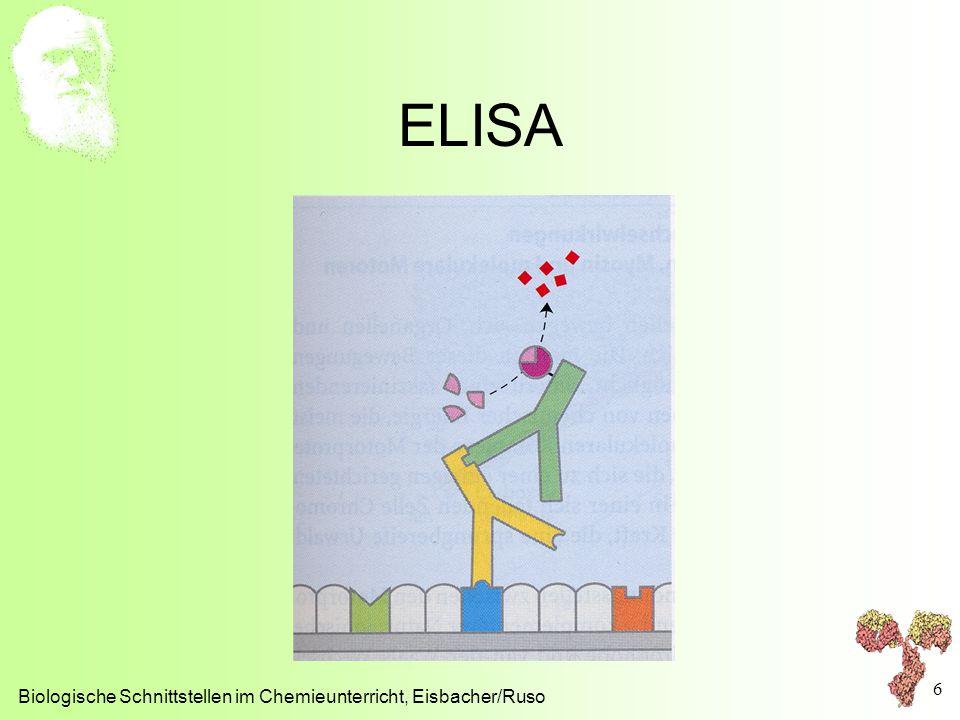 ELISA Biologische Schnittstellen im Chemieunterricht, Eisbacher/Ruso 6