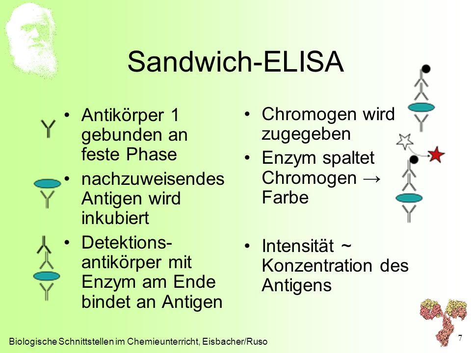 Sandwich-ELISA Antikörper 1 gebunden an feste Phase nachzuweisendes Antigen wird inkubiert Detektions- antikörper mit Enzym am Ende bindet an Antigen