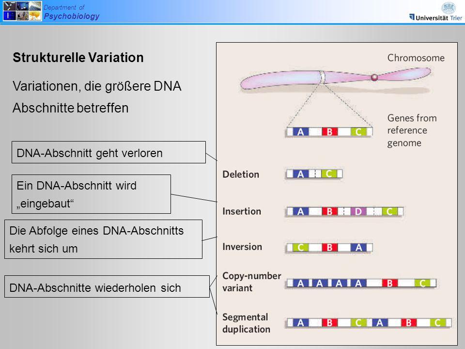 Department of Psychobiology Strukturelle Variation Variationen, die größere DNA Abschnitte betreffen DNA-Abschnitt geht verloren Ein DNA-Abschnitt wir