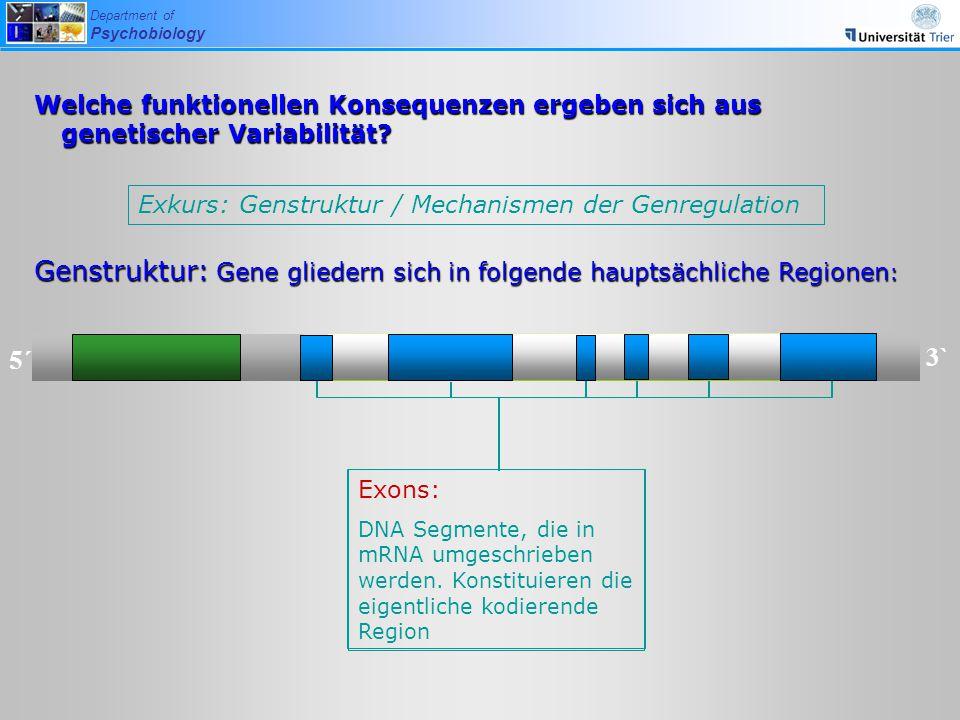 Department of Psychobiology Exkurs: Genstruktur / Mechanismen der Genregulation Welche funktionellen Konsequenzen ergeben sich aus genetischer Variabi