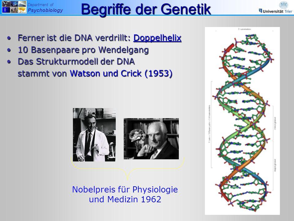 Department of Psychobiology Ferner ist die DNA verdrillt: DoppelhelixFerner ist die DNA verdrillt: Doppelhelix 10 Basenpaare pro Wendelgang10 Basenpaa