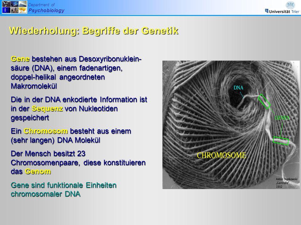 Department of Psychobiology Wiederholung: Begriffe der Genetik Gene bestehen aus Desoxyribonuklein- säure (DNA), einem fadenartigen, doppel-helikal an