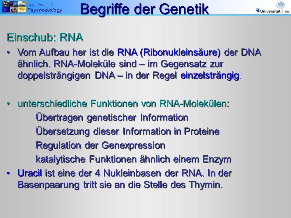 Department of Psychobiology Einschub: RNA Vom Aufbau her ist die RNA (Ribonukleinsäure) der DNA ähnlich. RNA-Moleküle sind – im Gegensatz zur doppelst