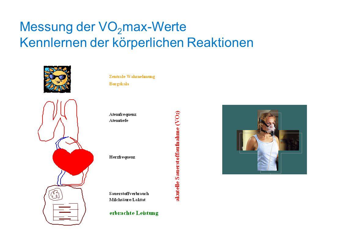Messung der VO 2 max-Werte Kennlernen der körperlichen Reaktionen