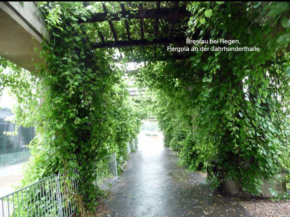 Breslau bei Regen, Vier-Kuppel-Pavillon an der Jahrhunderthalle