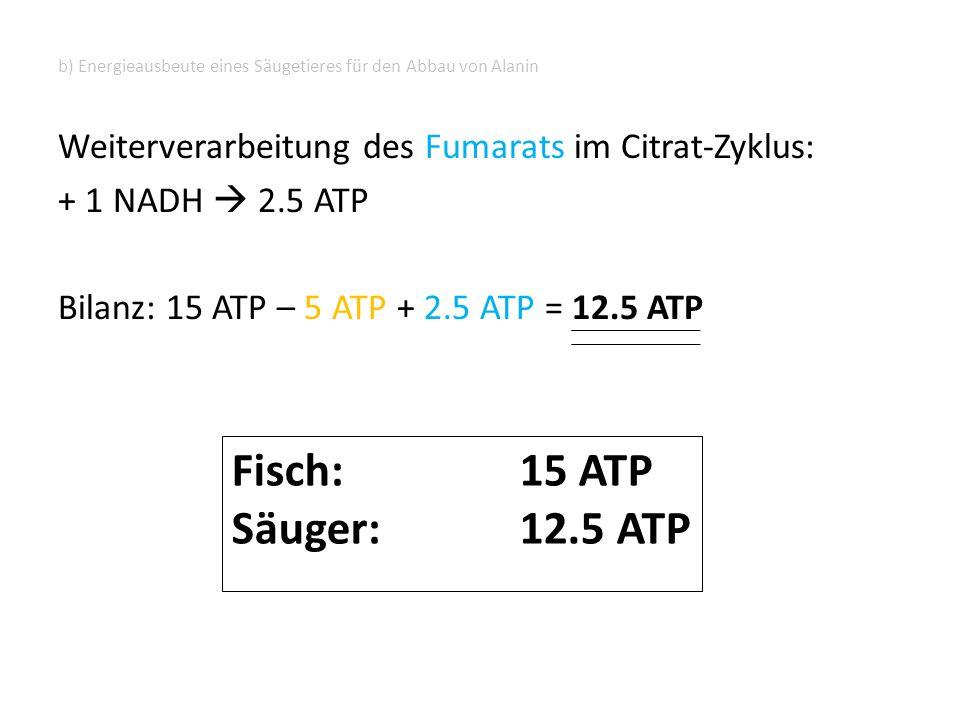 b) Energieausbeute eines Säugetieres für den Abbau von Alanin Weiterverarbeitung des Fumarats im Citrat-Zyklus: + 1 NADH  2.5 ATP Bilanz: 15 ATP – 5 ATP + 2.5 ATP = 12.5 ATP Fisch: 15 ATP Säuger: 12.5 ATP