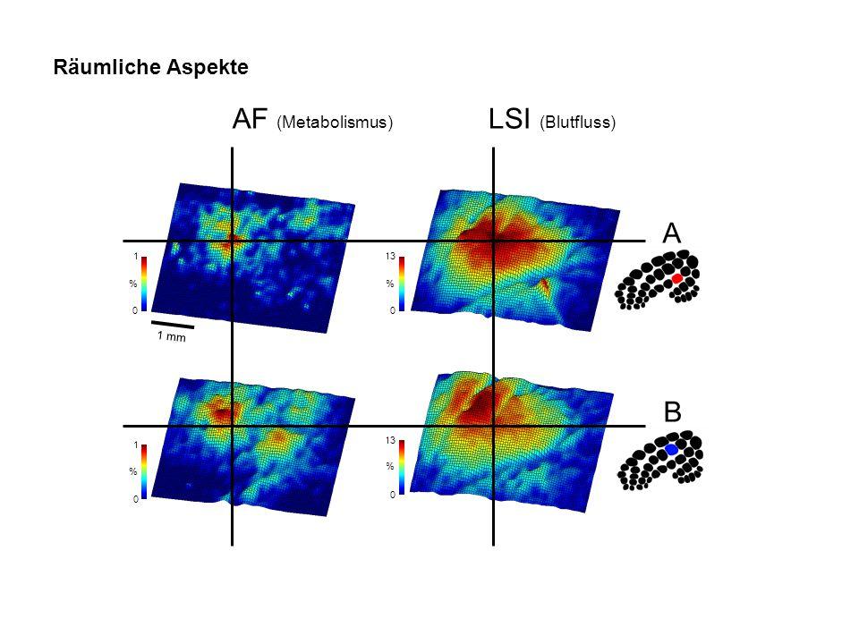 0 13 0 % % AF (Metabolismus) LSI (Blutfluss) A 0 1 % B 0 1 % Räumliche Aspekte 1 mm
