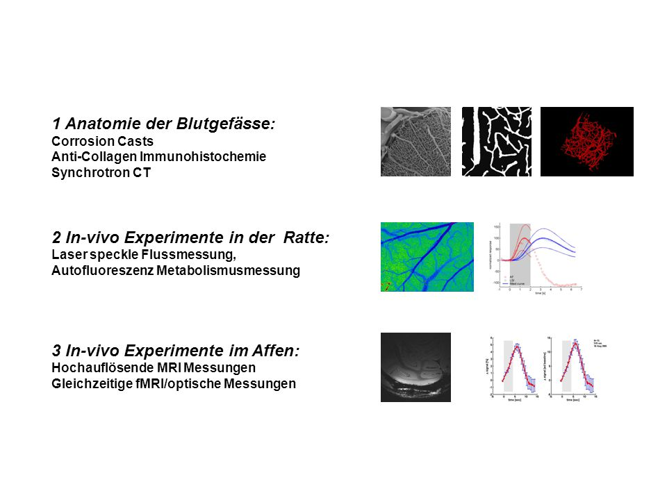 1 Anatomie der Blutgefässe: Corrosion Casts Anti-Collagen Immunohistochemie Synchrotron CT 2 In-vivo Experimente in der Ratte: Laser speckle Flussmess