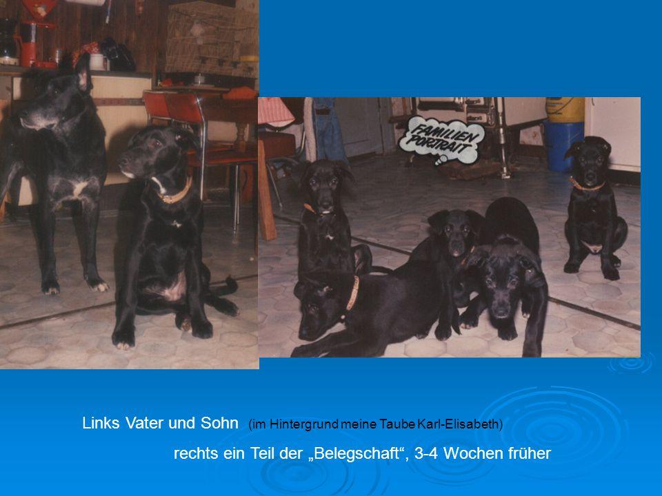 """Links Vater und Sohn (im Hintergrund meine Taube Karl-Elisabeth) rechts ein Teil der """"Belegschaft , 3-4 Wochen früher"""