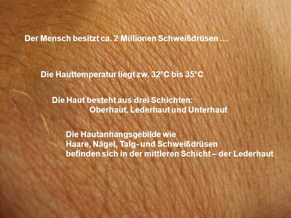Der Mensch besitzt ca. 2 Millionen Schweißdrüsen … Die Hauttemperatur liegt zw. 32°C bis 35°C Die Haut besteht aus drei Schichten: Oberhaut, Lederhaut