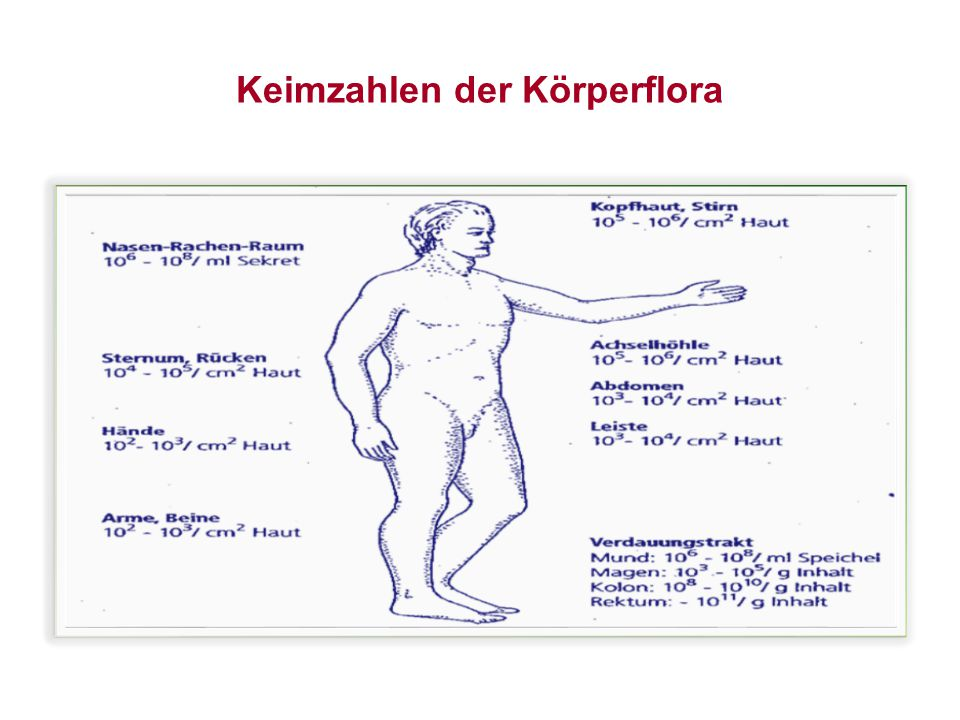 Keimzahlen der Körperflora