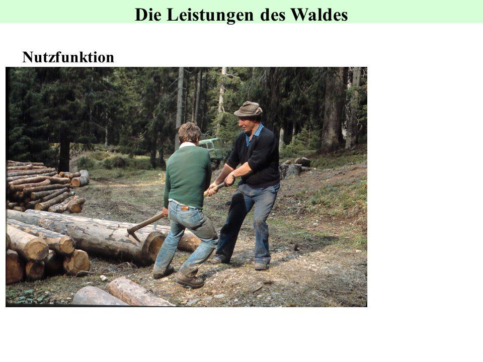 Nutzfunktion Die Leistungen des Waldes