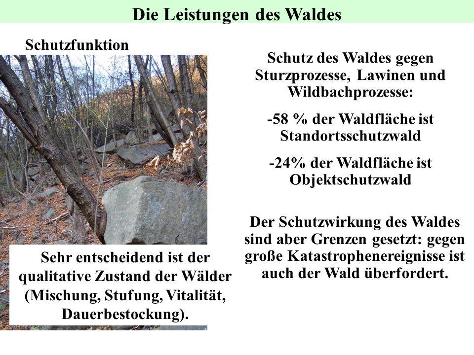 Schutzfunktion Der Schutzwirkung des Waldes sind aber Grenzen gesetzt: gegen große Katastrophenereignisse ist auch der Wald überfordert. Sehr entschei