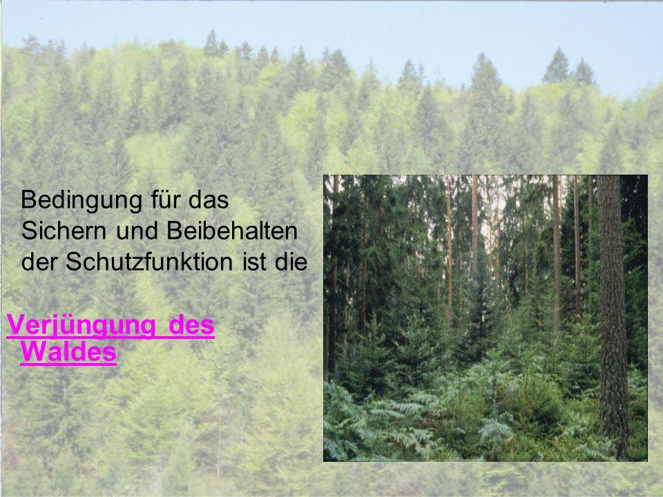 Bedingung für das Sichern und Beibehalten der Schutzfunktion ist die Verjüngung des Waldes