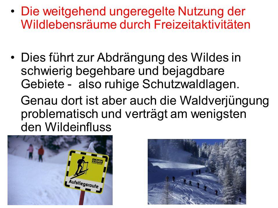 Die weitgehend ungeregelte Nutzung der Wildlebensräume durch Freizeitaktivitäten Dies führt zur Abdrängung des Wildes in schwierig begehbare und bejag