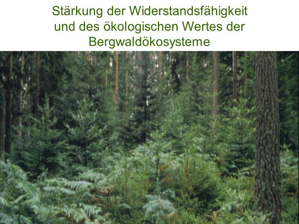 Stärkung der Widerstandsfähigkeit und des ökologischen Wertes der Bergwaldökosysteme