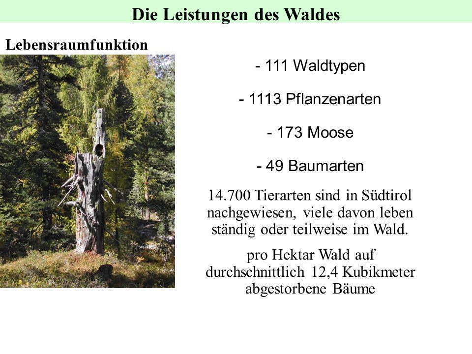 Lebensraumfunktion 14.700 Tierarten sind in Südtirol nachgewiesen, viele davon leben ständig oder teilweise im Wald. - 111 Waldtypen - 1113 Pflanzenar