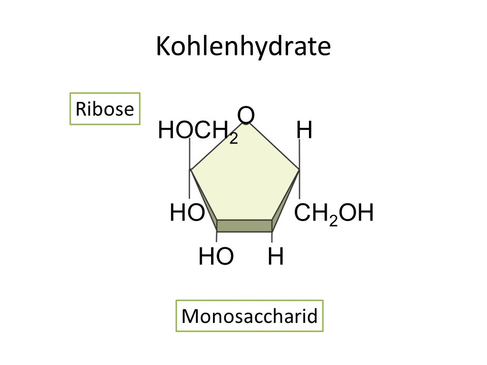 Kohlenhydrate HOCH 2 CH 2 OH HO H H O Ribose Monosaccharid