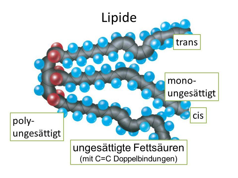 ungesättigte Fettsäuren (mit C=C Doppelbindungen) Lipide cis trans mono- ungesättigt poly- ungesättigt