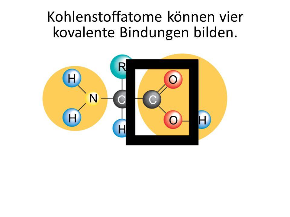 O CC O R H H H H N Kohlenstoffatome können vier kovalente Bindungen bilden.