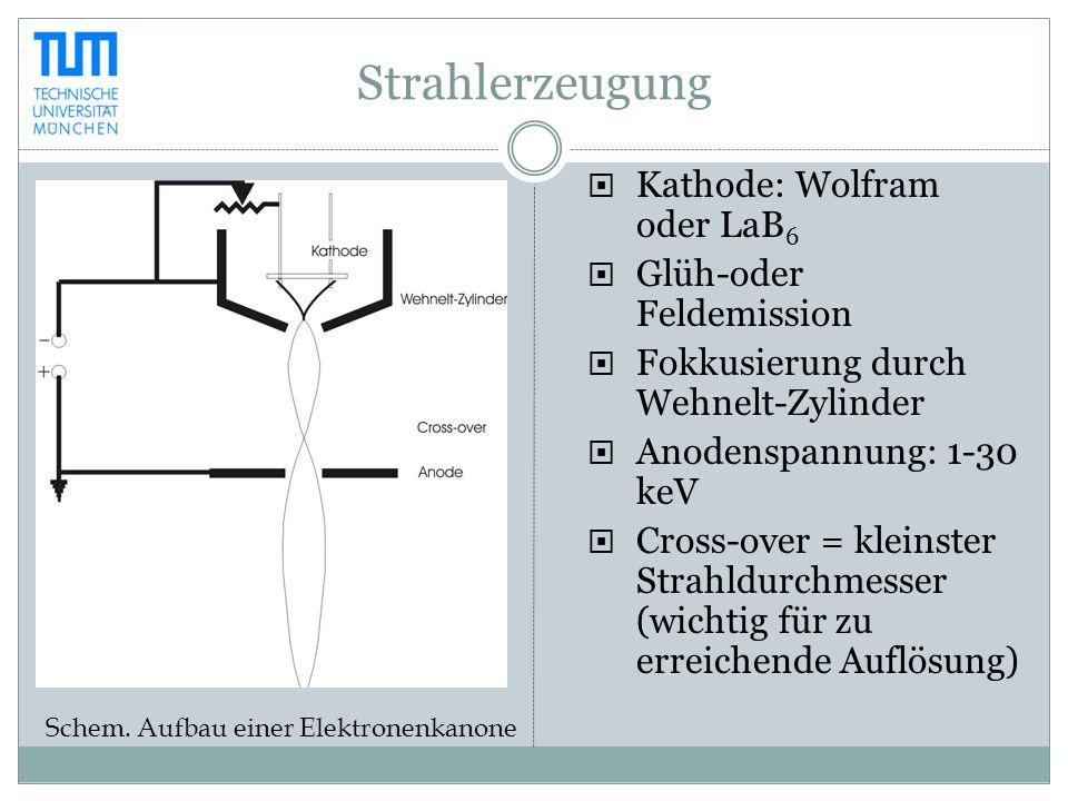 Strahlerzeugung  Kathode: Wolfram oder LaB 6  Glüh-oder Feldemission  Fokkusierung durch Wehnelt-Zylinder  Anodenspannung: 1-30 keV  Cross-over =