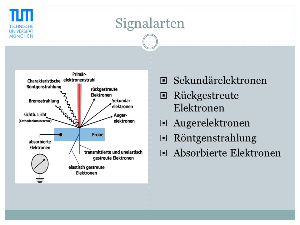 Signalarten  Sekundärelektronen  Rückgestreute Elektronen  Augerelektronen  Röntgenstrahlung  Absorbierte Elektronen