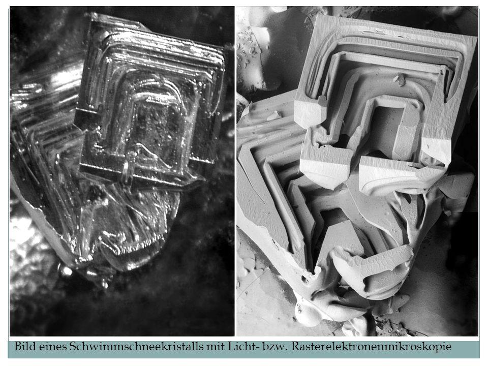 Bild eines Schwimmschneekristalls mit Licht- bzw. Rasterelektronenmikroskopie