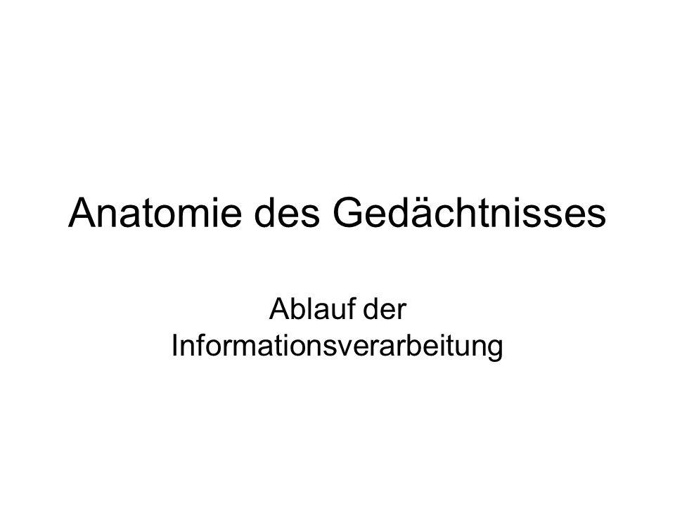 Anatomie des Gedächtnisses Ablauf der Informationsverarbeitung