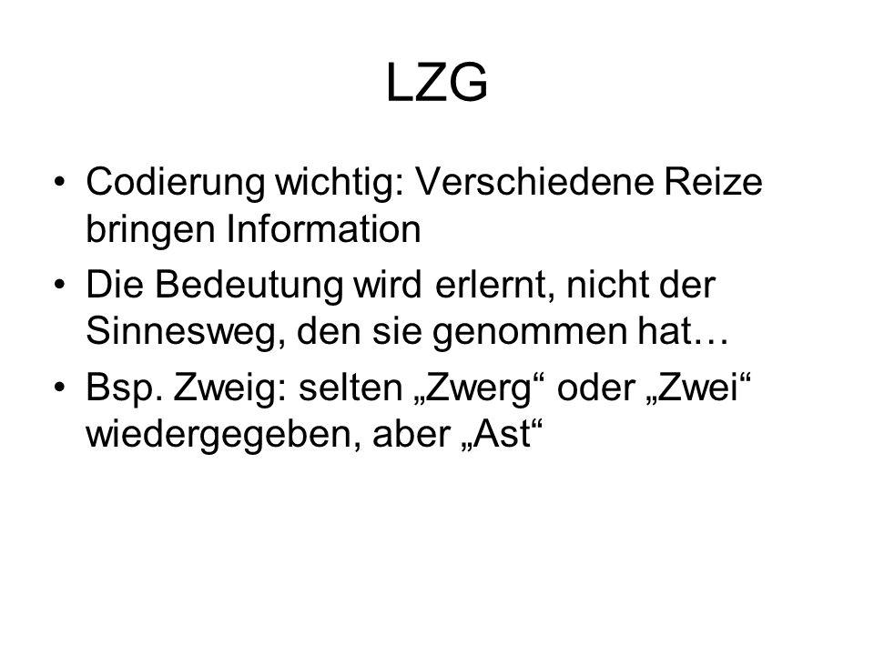LZG Codierung wichtig: Verschiedene Reize bringen Information Die Bedeutung wird erlernt, nicht der Sinnesweg, den sie genommen hat… Bsp.