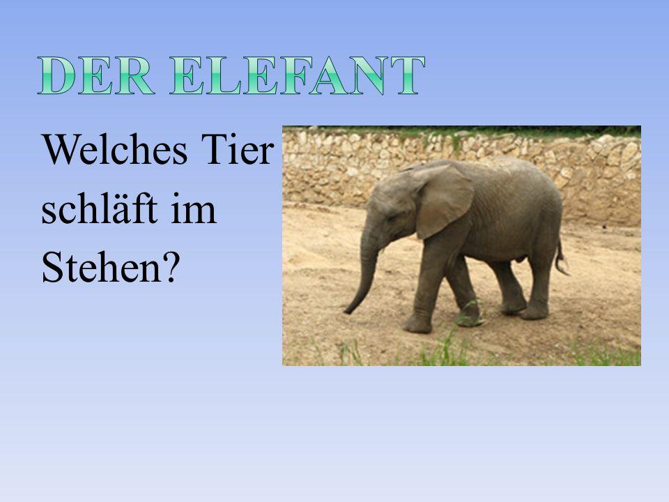 Welches Tier schläft im Stehen?